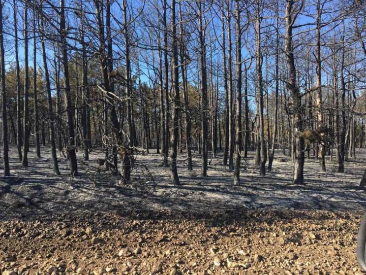 В окупованому Криму згоріло 150 га лісу…