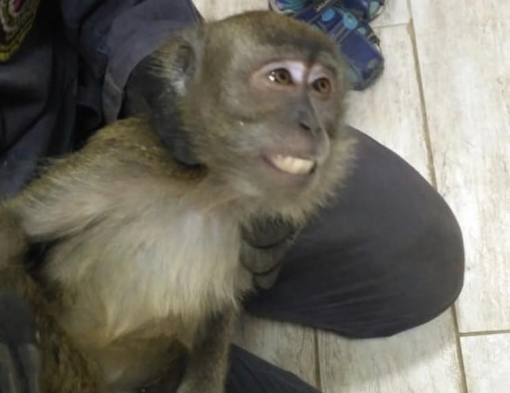 В Новоросійську мавпа втекла на дах від…