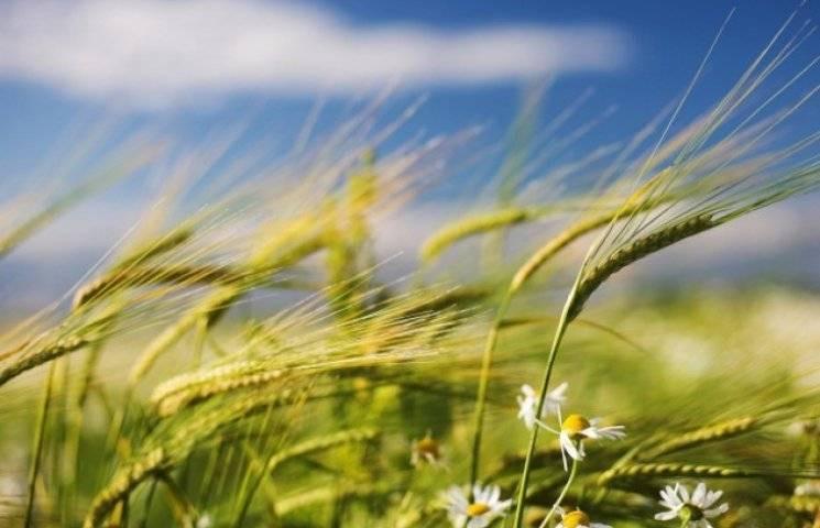 Закарпатье: Прогноз погоды на 16 августа…