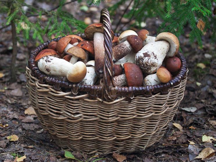 Як не стати жертвою грибного сезону…