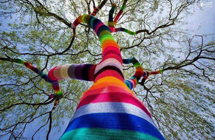 У Франківську дерева вдягнуть у в'язані…