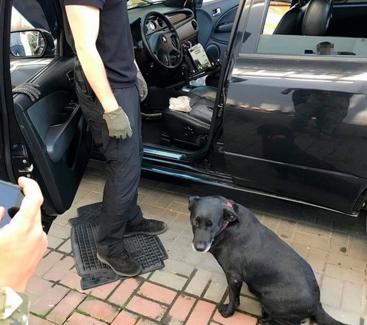 Службовий собака знайшов пакет з кокаїно…