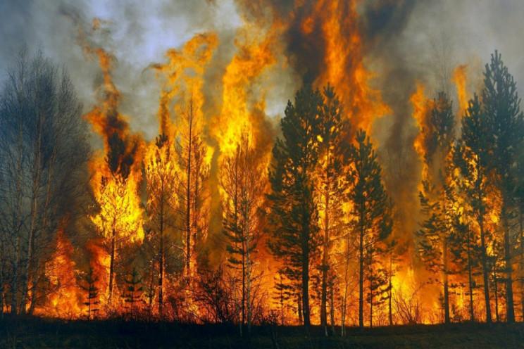 Киянам порадили, що робити в разі лісови…