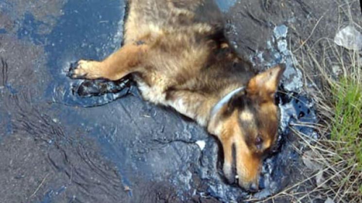 На Дніпропетровщині невідомі втопили цуц…