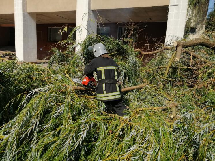 В Кропивницком аварийное дерево едва не…