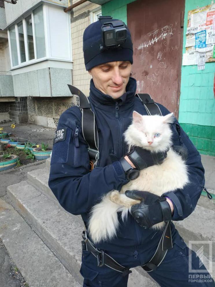 У Кривому Розі екстремал врятував кота з…