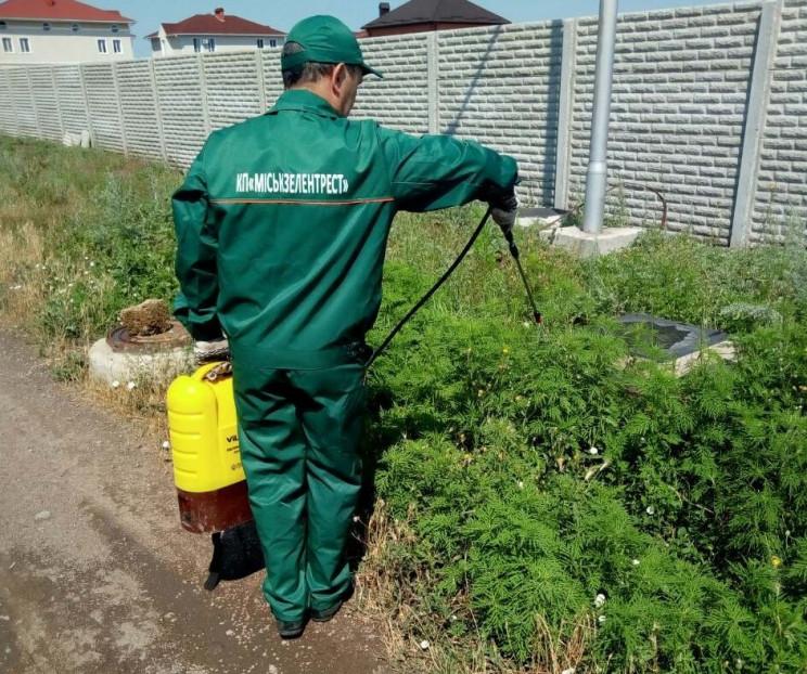 Де росте амброзія: В Одесі створили інте…