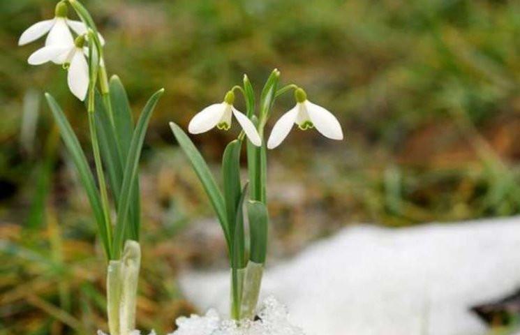 Закарпаття: Прогноз погоди на 15 березня…