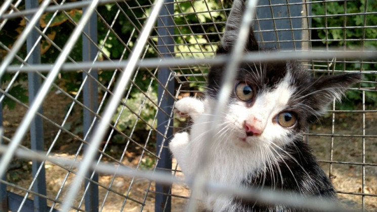 Зоорятувальники у Києві кілька днів ряту…