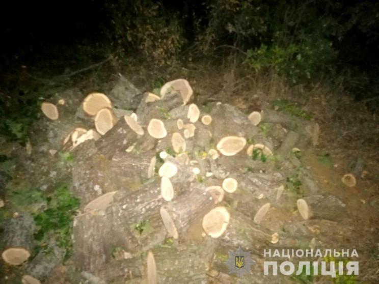 """На Херсонщині """"чорні"""" лісоруби спиляли ш…"""