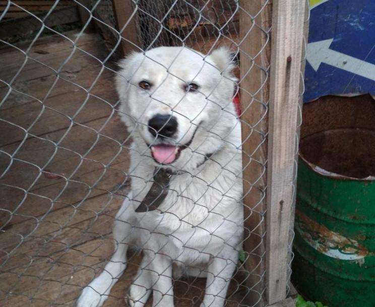 У Вінниці викрали пса, який охороняв тер…