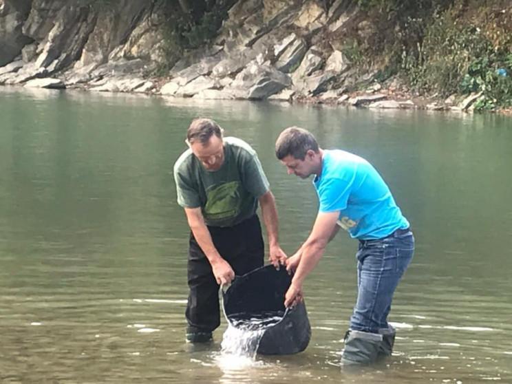 У гірські річки Прикарпаття випустили ло…