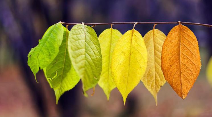 Коли на Сумщину прийде справжня осінь…