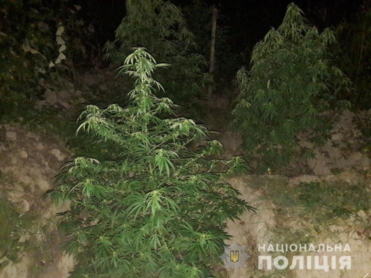 На Виноградівщині чоловік орендував земл…