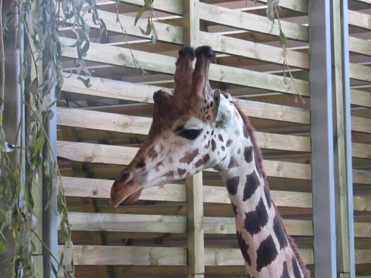 У Миколаївському зоопарку оселився тенді…
