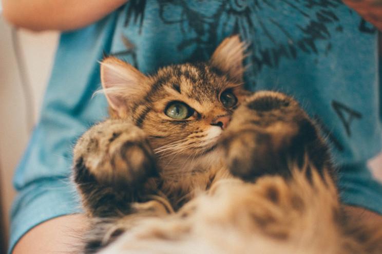 Коли любиш тварин, важко зупинитися: Сім…
