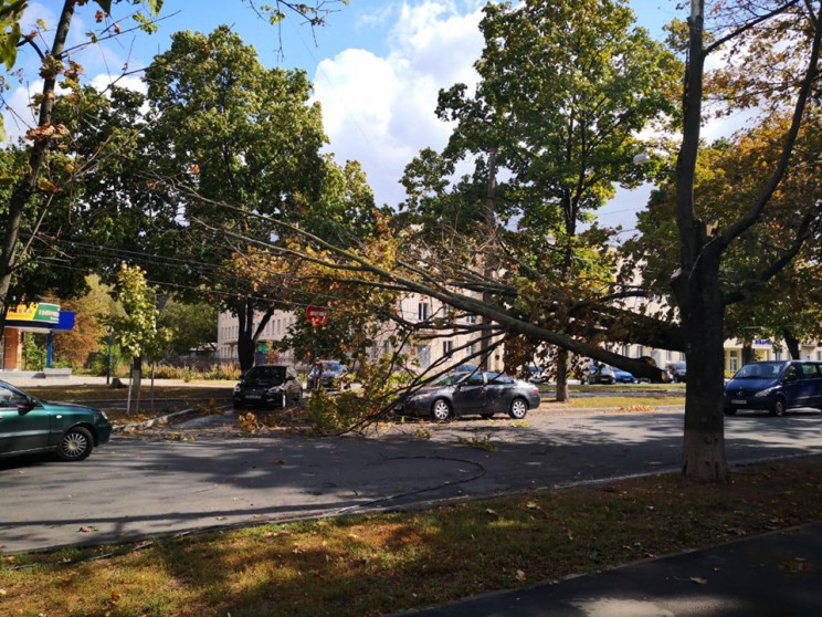 Неподалік центру Сум дерево обірвало тро…