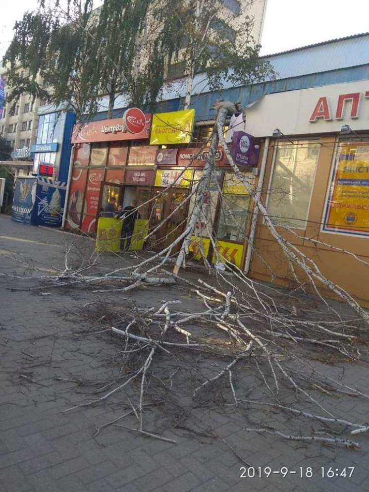 У центрі Кропивницького дерево впало на…