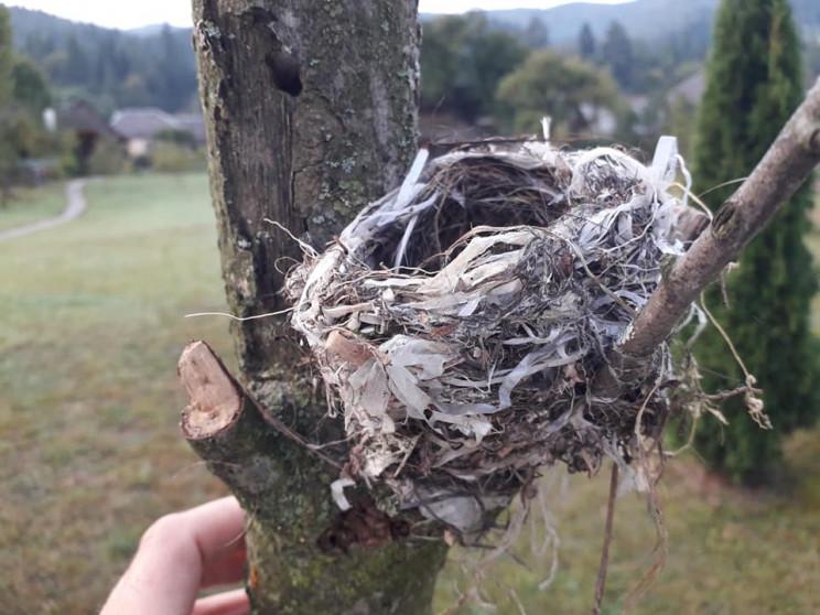 На Закарпатті знайшли пташине гніздо, зв…