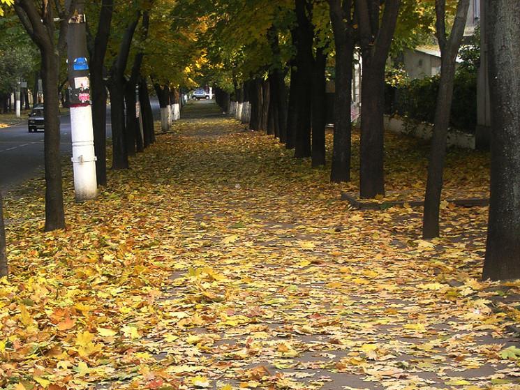 Холодно й похмуро буде 20 вересня на Хме…