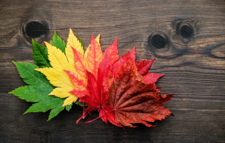 Час кольорового листя: Де відпочити та к…