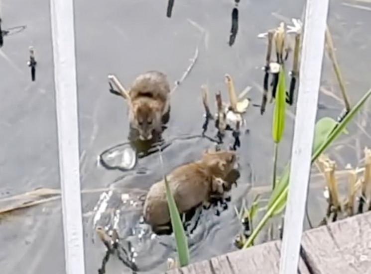 Купаються у водоймах та весело стрибають…