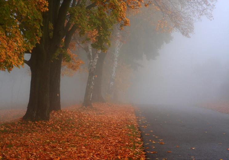 Дожди, туманы, солнце и потепление: На в…