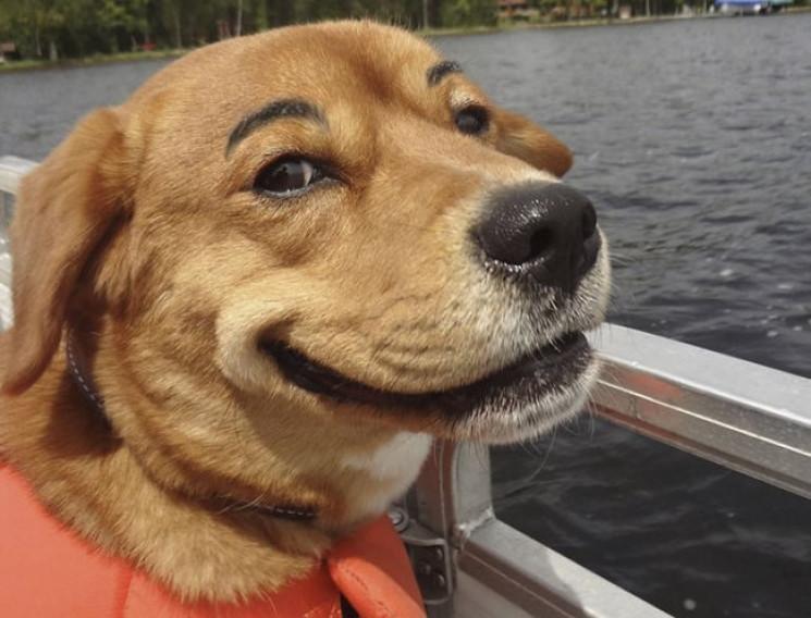 До дня тварин і усмішки: Як щиро радіють…