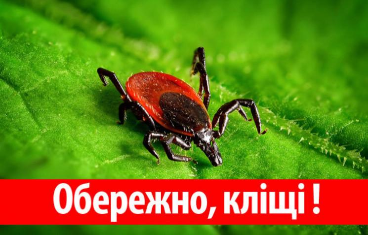 Житель Кропивницкого из-за клеща заболел…