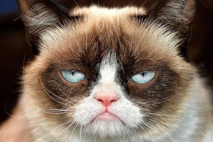 Яким би ви були котиком (ТЕСТ)…
