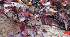 Що накоїла золота осінь на Львівщині (ФО…