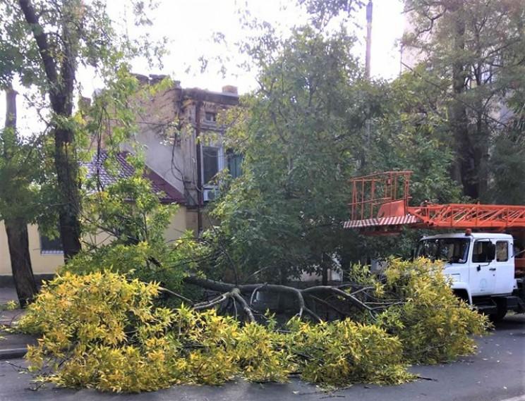 В Одесі пориви вітру повалили п'ять дере…