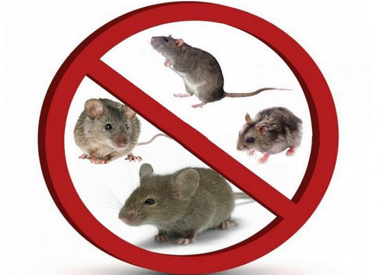Кропивничани через петицію просять лікві…