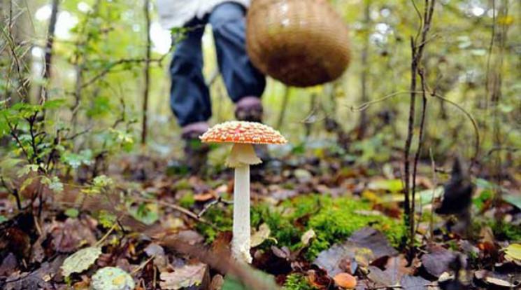 "Результат пошуку зображень за запитом отруєння грибами"""