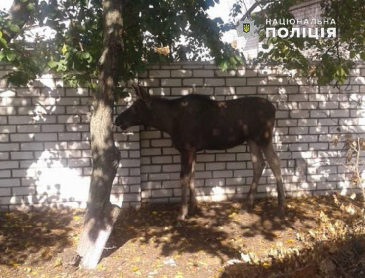 На Луганщині поліцейські перекрили рух,…