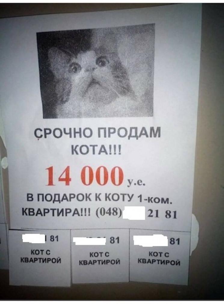 В Одесі за $14 тисяч продають кота: Квар…
