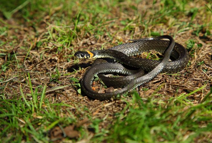 У центрі Запоріжжя повзала змія…