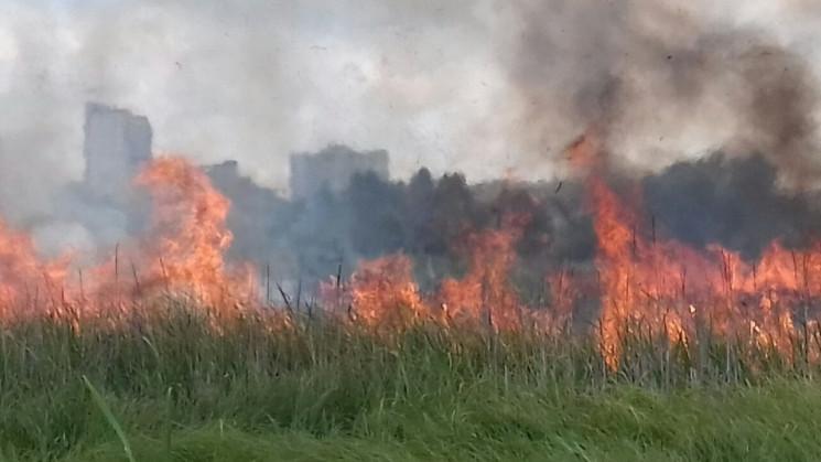 Майже півтори тисячі пожеж в екосистемах…