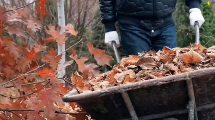 В Кропивницком бесплатно принимают листь…