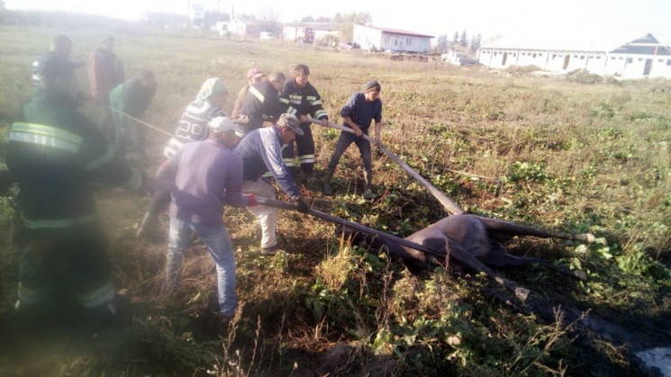 Біля Пустомитів рятувальники витягнули к…