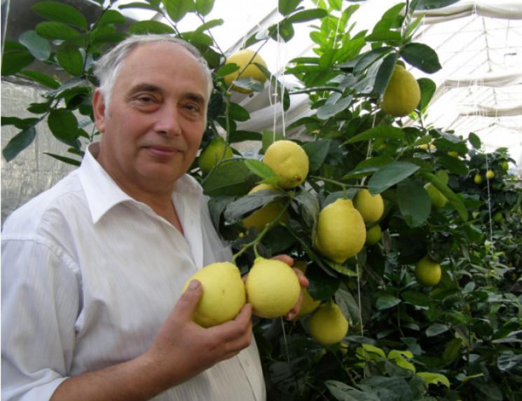 Винахідник про вирощування ананасів під…