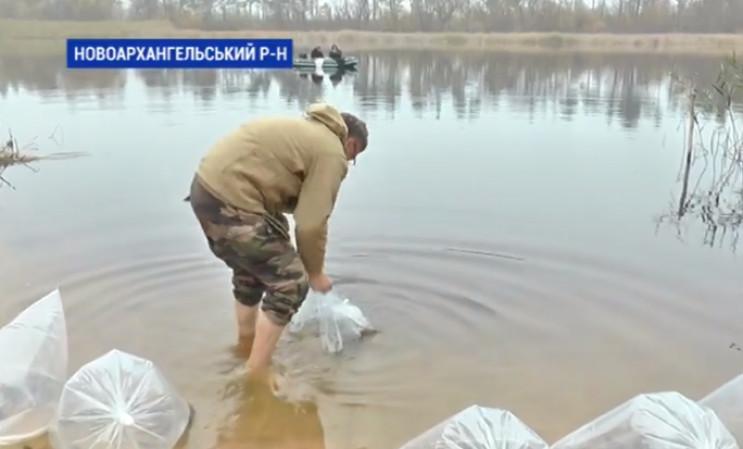 На Кропивниччині зарибили осетрами річку…