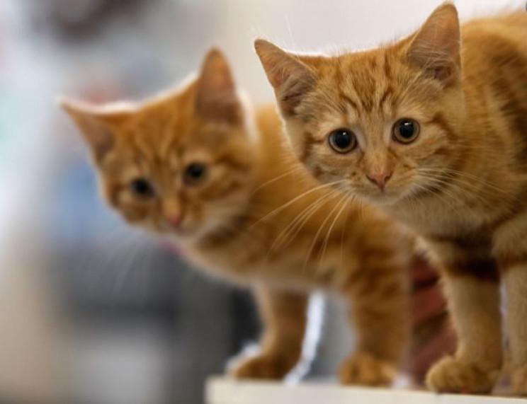 Бережіть котів: На столичних вулицях дог…
