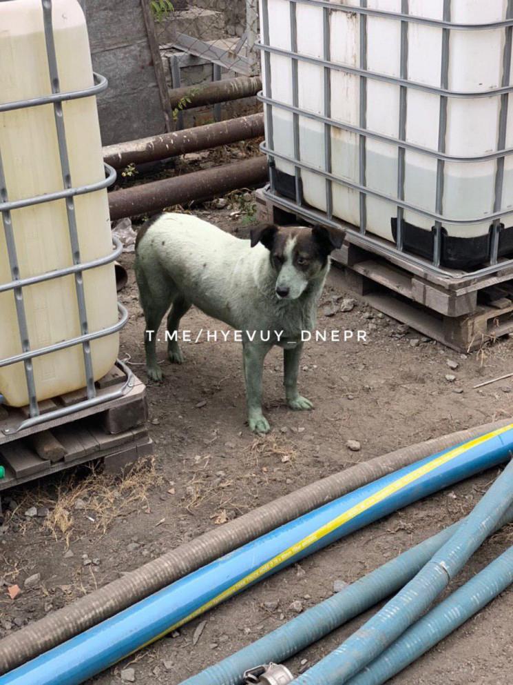 В Днепре заметили зеленую собаку…