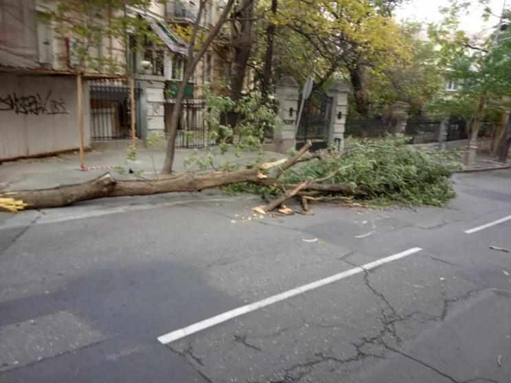 Через сильний вітер в Одесі падають дере…