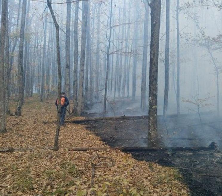 У Сіверському районі загорілася лісова п…