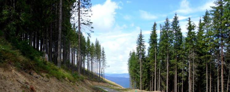 """Закарпатські лісівники показали """"дороги…"""