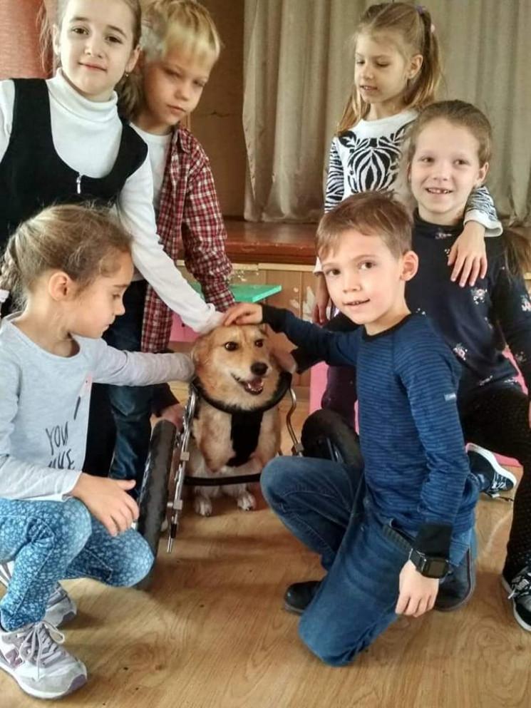 У Дніпрі школярі пестили дволапого собак…