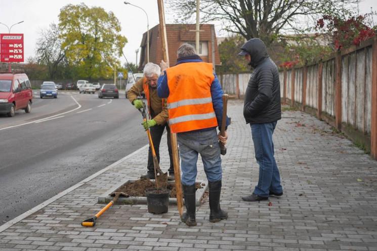 В Ужгороді озеленяють вулицю Шумну…