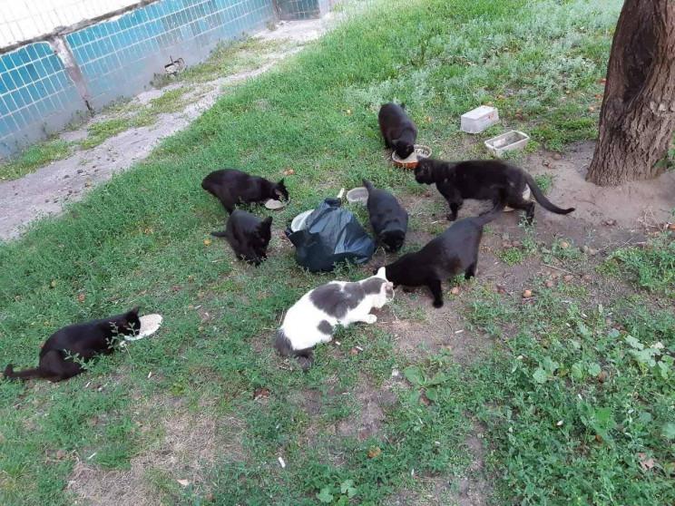 У Кам'янському живе хазяйка 34 котів…